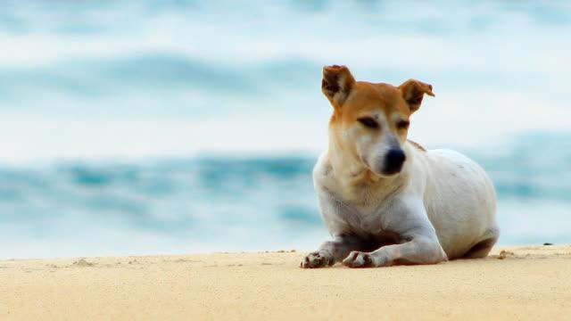 Stray Hund am Strand in Thailand