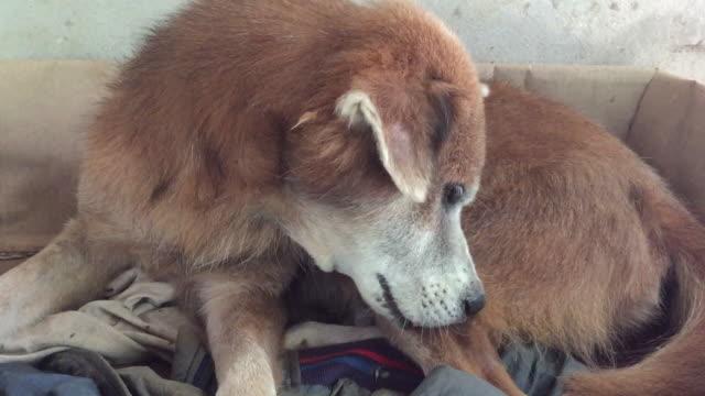 stray hund hunde hund deodikose - säugetier stock-videos und b-roll-filmmaterial