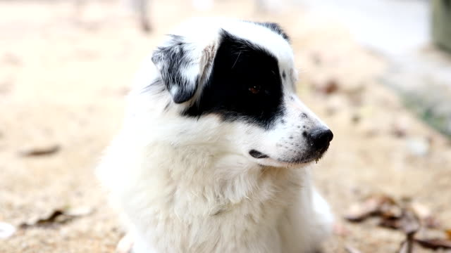 stray dog close-up - border collie stock videos & royalty-free footage