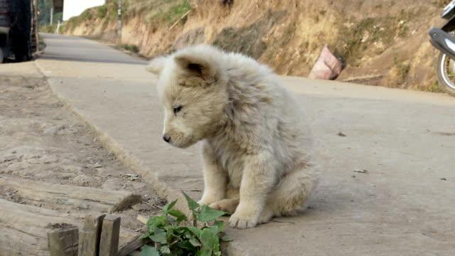 ritirarsi cane, cucciolo senzatetto - in rovina video stock e b–roll