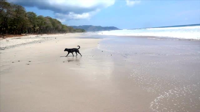 SLO MO Stray dog on the beach