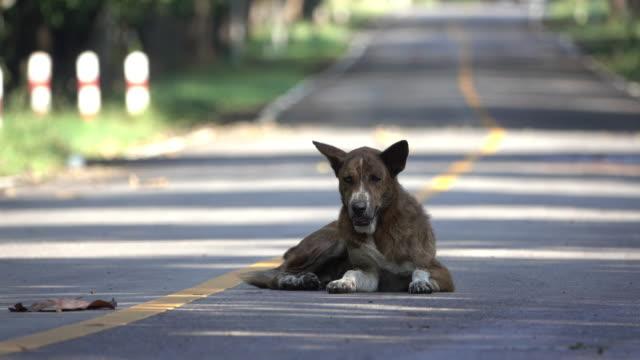 vídeos y material grabado en eventos de stock de perro callejero en el camino - animales salvajes