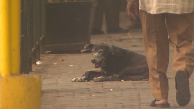 Stray dog pants while laid on busy pavement Available in HD.