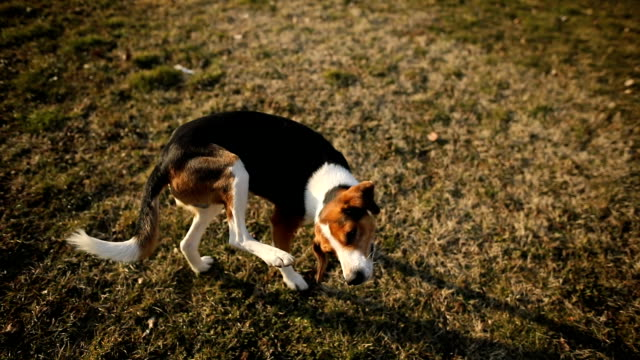 stray dog scratching itchy skin on grass - rolling stock videos & royalty-free footage