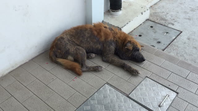 stray dog sleeping canine demodicosis - hair follicle stock videos and b-roll footage