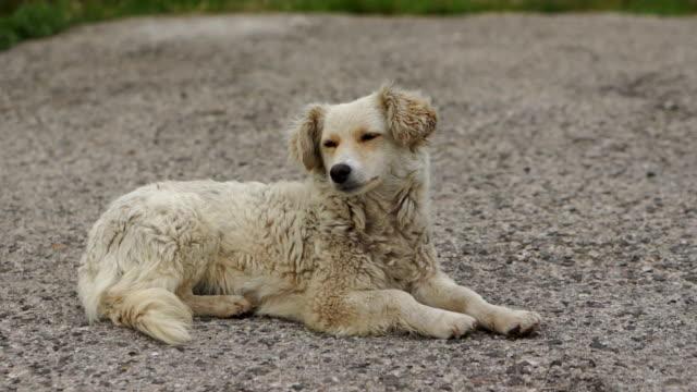 cane isolata - abbandonato video stock e b–roll