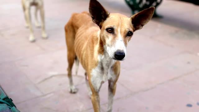 stray dog - stray animal stock videos & royalty-free footage