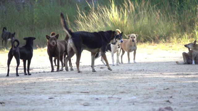 汚れた道路の野良犬 - 迷子の動物点の映像素材/bロール
