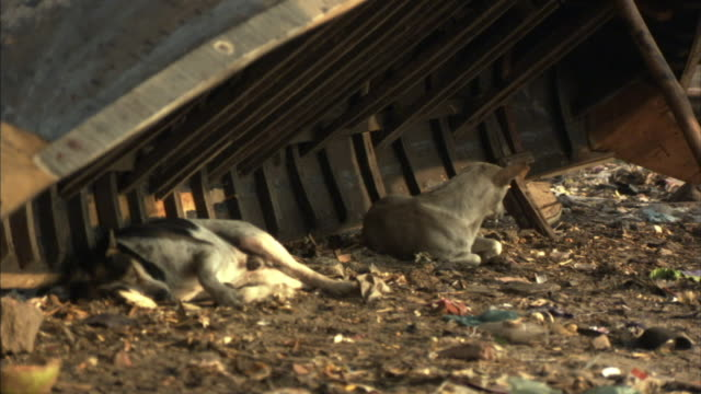 ms, zi, stray dogs resting under up turned boat on dirty ground, dhaka, bangladesh - dhaka stock-videos und b-roll-filmmaterial