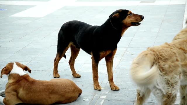 vídeos de stock, filmes e b-roll de stray cães - latindo