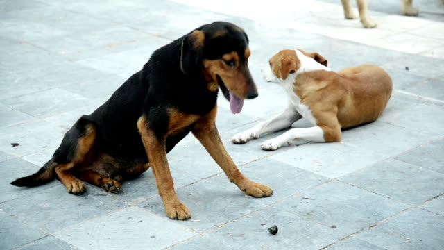 stray dogs - panting stock videos & royalty-free footage