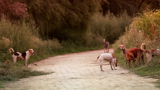 stray dogs - group of animals stock videos & royalty-free footage