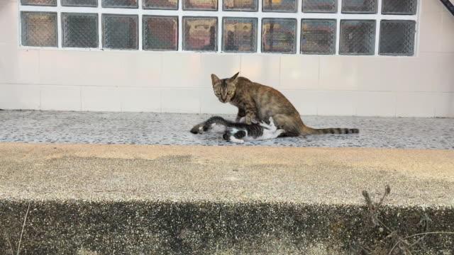 Stray homeless cat feeding her kittens