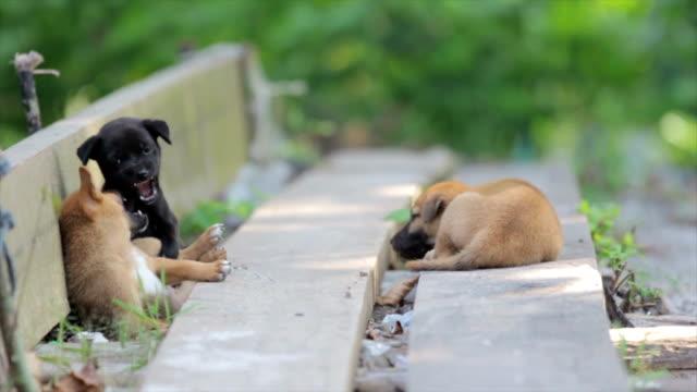 stray welpen spielen - kleine gruppe von tieren stock-videos und b-roll-filmmaterial