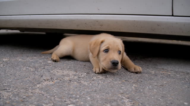 slo mo stray puppy lying beside a car - puppy stock videos & royalty-free footage