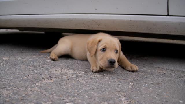 SLO MO Stray Puppy Lying Beside A Car