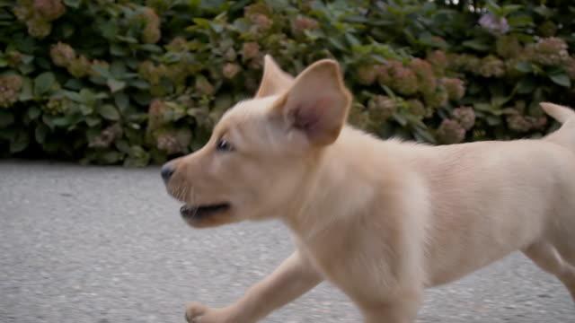 slo mo stray puppy running along the road - rädda koncept bildbanksvideor och videomaterial från bakom kulisserna
