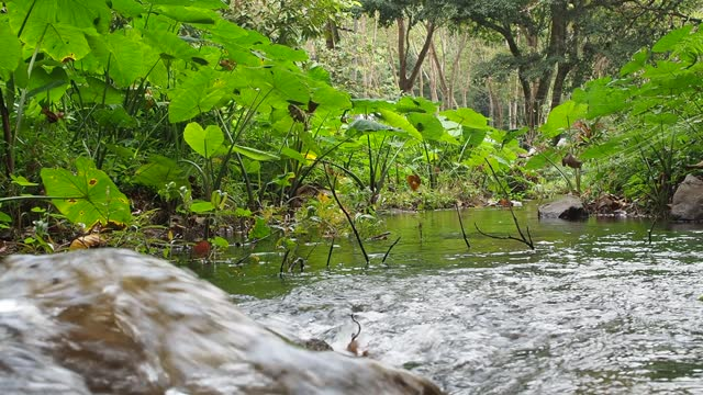 stream and flowing water in forest - oirase river stock videos & royalty-free footage