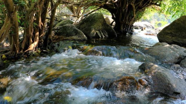 stream and waterfall in forest