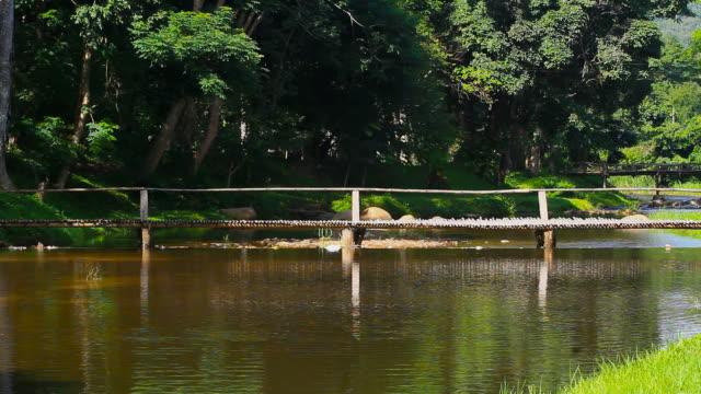 vídeos de stock e filmes b-roll de fluxo no parque - rebento de bambu