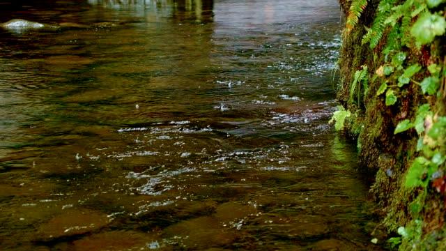 stream during rain columbia river gorge oregon rain in oneata gorge 93 - columbia river gorge stock videos & royalty-free footage