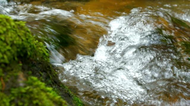 vídeos de stock, filmes e b-roll de fluxo caindo na floresta - floresta da bavária