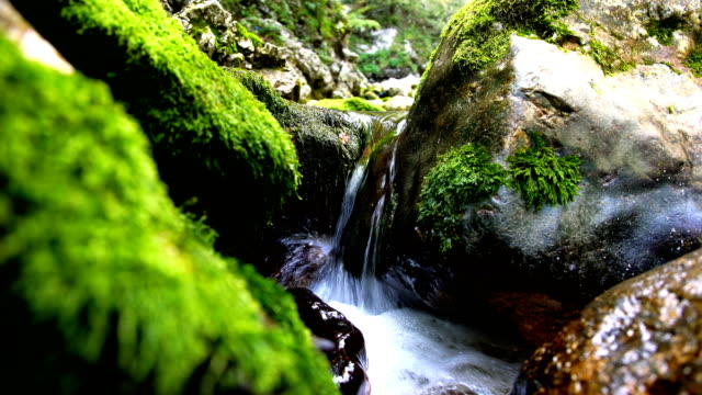 stream flowing between moss-covered rocks. - slovenia stock videos & royalty-free footage