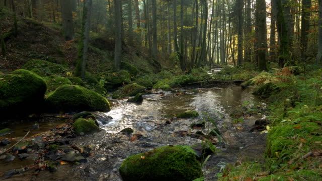 stream flowing in autumn forest - moss stock videos & royalty-free footage