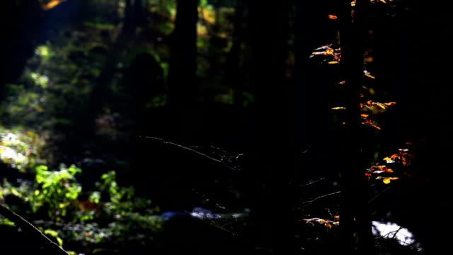 Strom fließenden im Herbst Forest