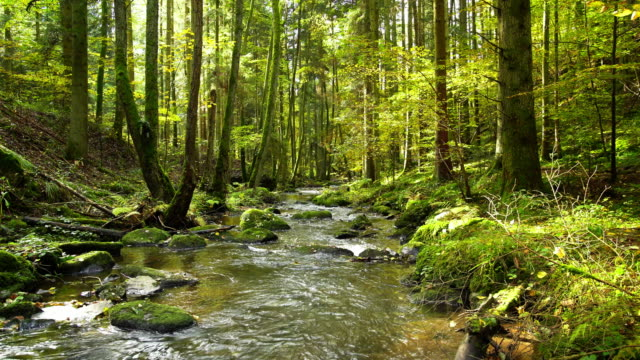 stream flowing in autumn forest - flowing water stock videos & royalty-free footage