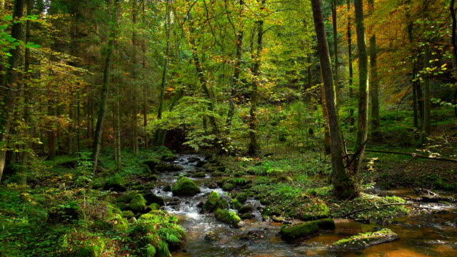 Stream Flowing In Autumn Forest