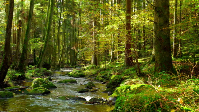 Stream Flowing In Autumn Forest