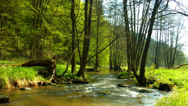 stream flowing in forest edge area - springtime stock videos & royalty-free footage