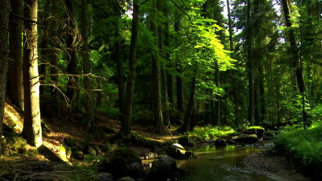 vídeos de stock, filmes e b-roll de corrente fluindo em verde floresta - floresta da bavária