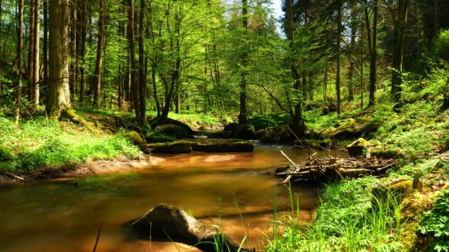 のどかな春の森に流れる