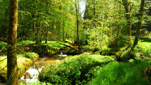 stream flowing in idyllic spring forest - idyllic video stock e b–roll