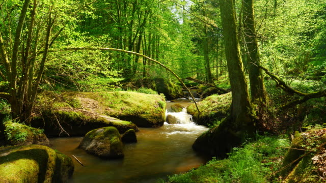 stream flowing in idyllic spring forest - beauty in nature stock videos & royalty-free footage
