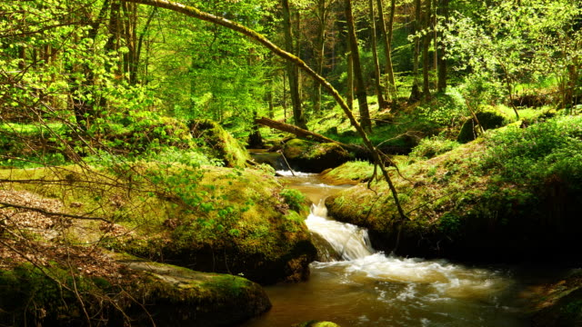 stream flowing in idyllic spring forest - beech tree stock videos and b-roll footage
