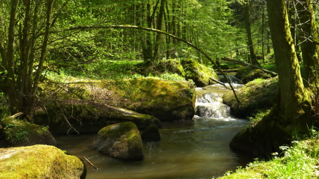 vídeos de stock e filmes b-roll de stream flowing in idyllic spring forest - dolly shot