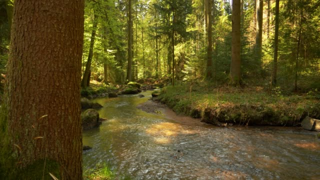 Stream Flowing In Idyllic Spring Forest