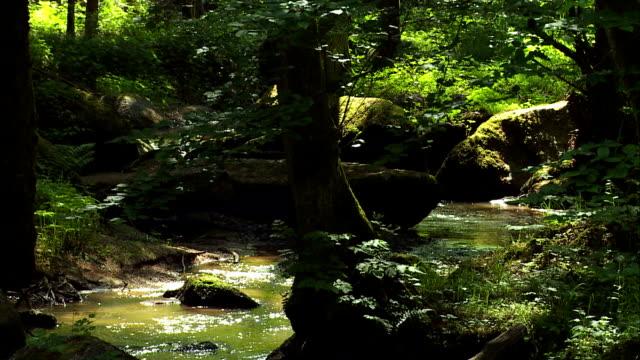 vídeos de stock, filmes e b-roll de corrente fluindo em rocky floresta - floresta da bavária