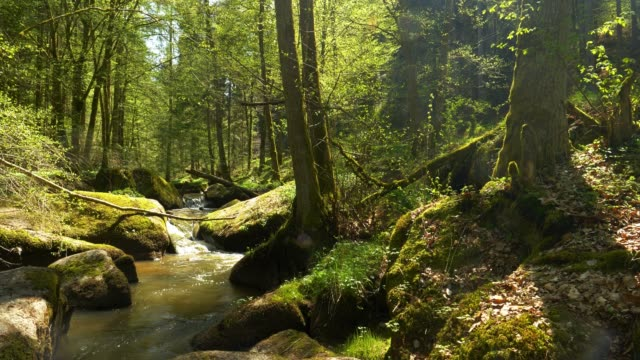 stream flowing in rocky spring forest - dolly shot stock videos & royalty-free footage