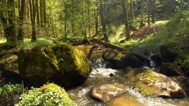 In felsigen Frühlingswald fließenden Strom