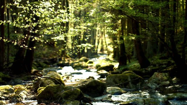 stream flowing in stony forest - moss stock videos & royalty-free footage