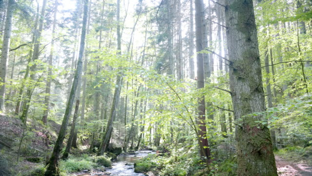 stream flowing in sunny spring forest - ausgebleicht stock-videos und b-roll-filmmaterial