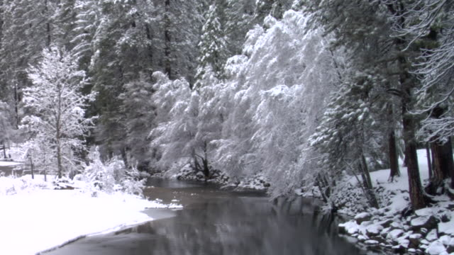 ws stream flowing near snow-covered trees in yosemite national park / california, usa - yosemite national park video stock e b–roll