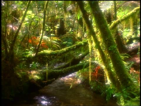 soft focus stream flowing through dense, mossy rainforest / westland, south island, new zealand - soft focus video stock e b–roll