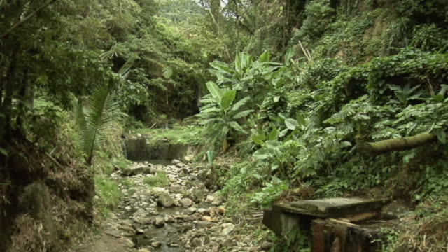 vídeos y material grabado en eventos de stock de ws stream flowing through tropical rainforest / saint lucia - kelly mason videos