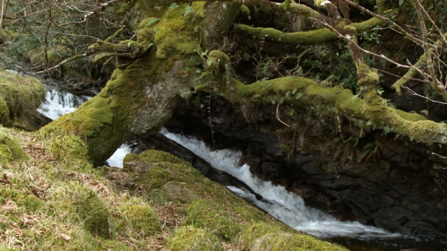 stream flowing under a mossy log - narrow stock videos & royalty-free footage