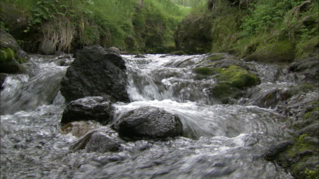 Stream flows through Changbaishan National Nature reserve, Jilin Province, China